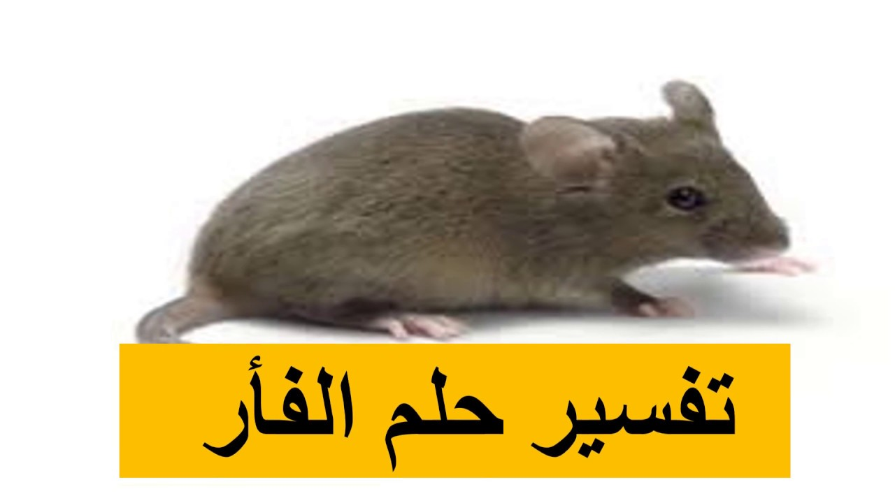 صور تفسير الاحلام فئران , رؤية حلم الفئران في المنام