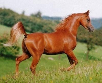 صورة افضل انواع الخيول , اكثر انواع الخيول جوده واصاله 125 5