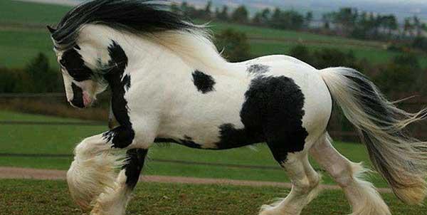 صورة افضل انواع الخيول , اكثر انواع الخيول جوده واصاله 125 7