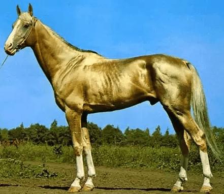 صورة افضل انواع الخيول , اكثر انواع الخيول جوده واصاله 125