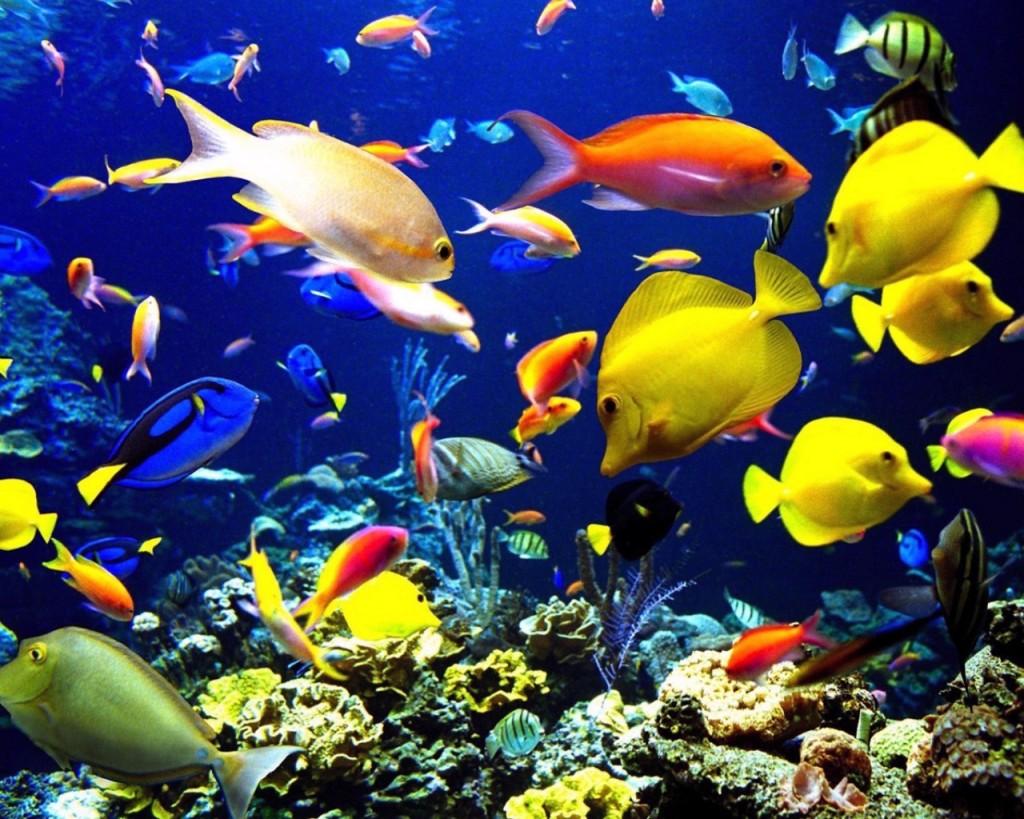 صورة صور قاع البحر , صور مذهله لقاع البحار