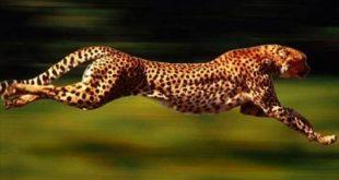 صورة اسماء حيوانات برية , تسميات وانواع الحيوانات البريه لن تصدقها
