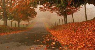 صور عبارات جميلة عن فصل الخريف , اجمل فصل في فصول السنه هو الربيع