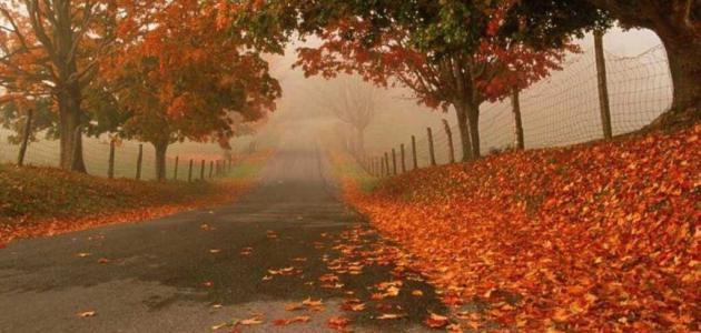 صورة عبارات جميلة عن فصل الخريف , اجمل فصل في فصول السنه هو الربيع