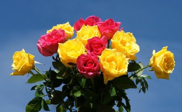 صور اجمل الورود الصفراء , اجمد باقات الور باللون الاصفر