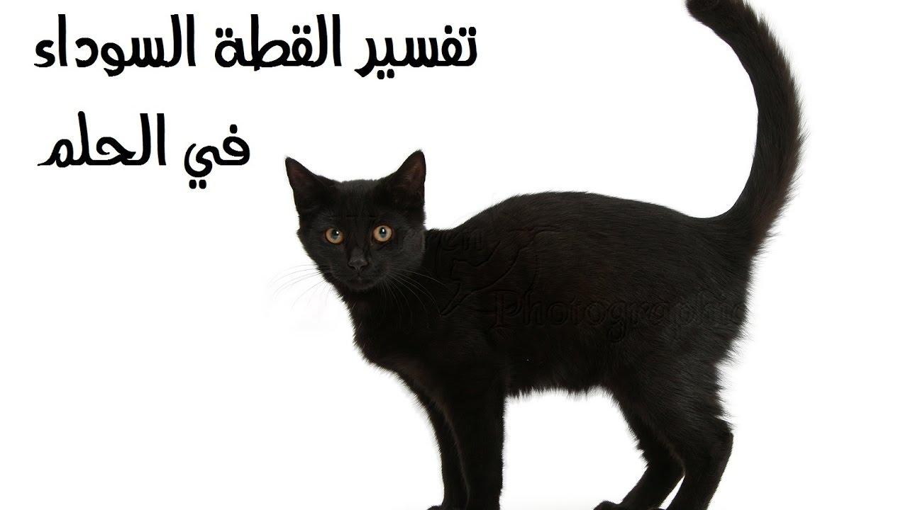 صور تفسير الاحلام قطة سوداء , ابشروا يا اهل الحلم القطة السوداء حظ سعيد
