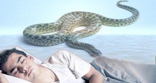 تفسير حلم لدغة الثعبان في اليد اليمنى , رؤية الثعبان في الحلم
