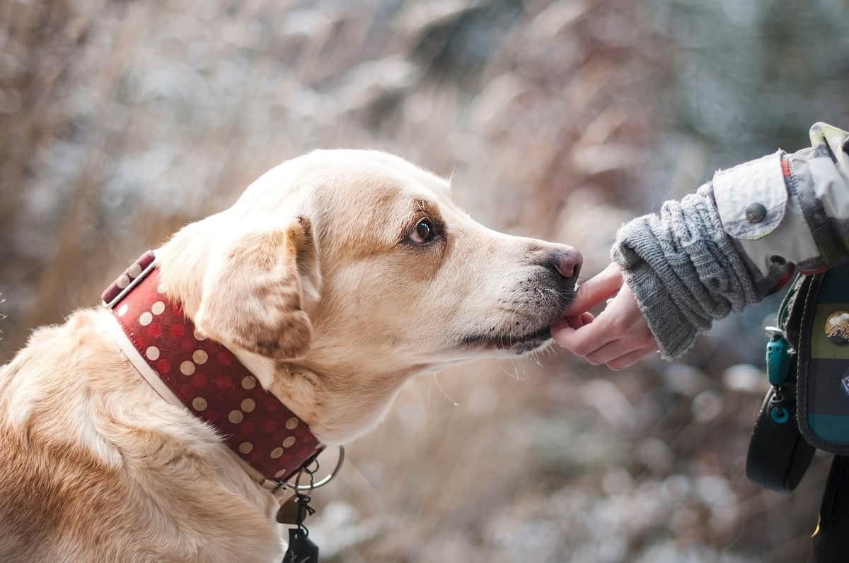 صورة تفسير الاحلام الكلاب , رؤية الكلب في المنام