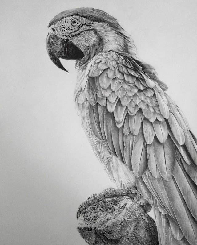 صورة رسم حيوانات بالرصاص , طريقة رسم الحيوان بالقلم الرصاص