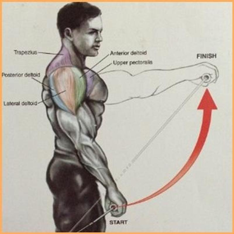بالصور عضلات الجسم وتمارينها , رياضه وتمارين تفيد جسمك 2049 2