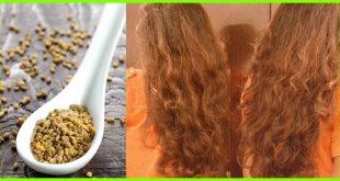 فوائد الحلبة المطحونة للشعر , ما تاثير الحلبه المطحونه على الشعر