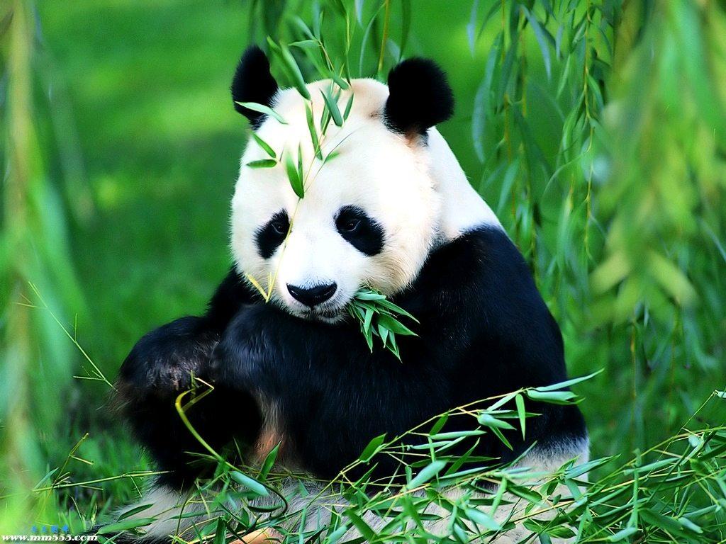 صورة اجمل حيوان في العالم , الصور المنفرده لاجمل حيوانات تعيش على وجه الارض