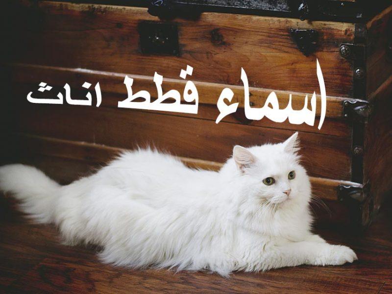 صورة اسماء قطط اناث , قطط جميله باسماء مختلفه