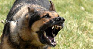 صور ماهو الكلب العقور , العقور وماذا تشير اليه فى الكلاب