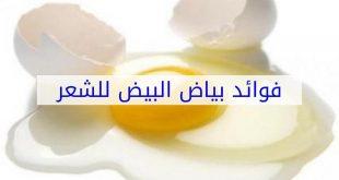 بالصور بياض البيض للشعر , فائده بياض البيض للشعر 2455 3 310x165