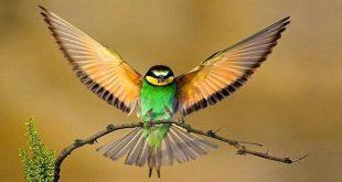 صورة بحث عن الطيور , افضل صور للبحث عن الطيور المتنوعه و الجميله
