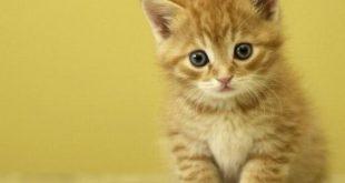 تفسير رؤية القطط لابن سيرين , رؤيا القطه في المنام لتفسير العلامه ابن سيرين
