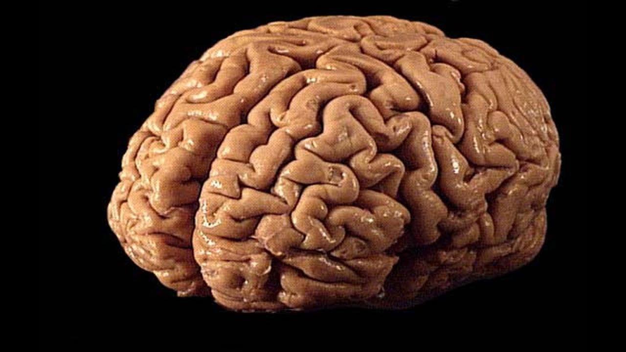 صور علاج المياه على المخ بالاعشاب , كيف نعالج المياه علي المخ وهل صحيح تعلاج بالاعشاب