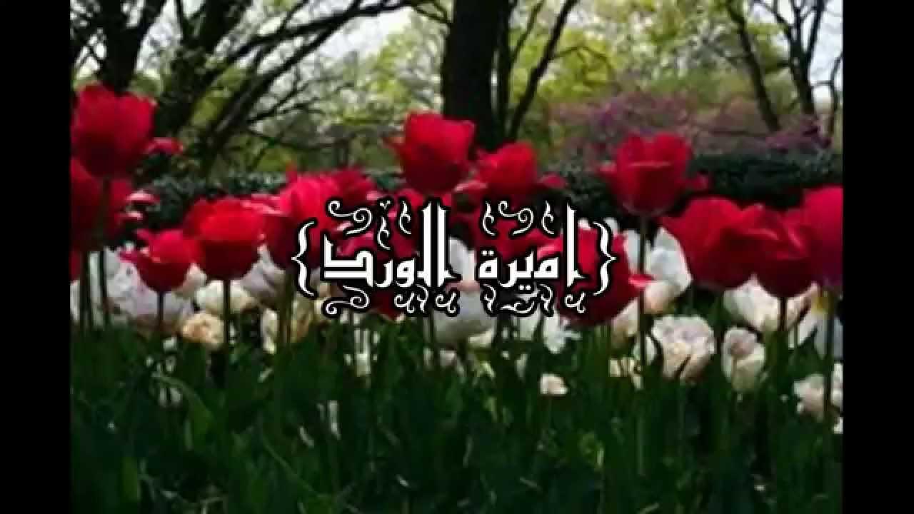 صورة كلمات اميرة الورد , اغنية محمد عبده