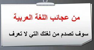 بالصور اجمل ما قيل في اللغة العربية , كلام جميل عن اللغة العربية 6377 3 310x165