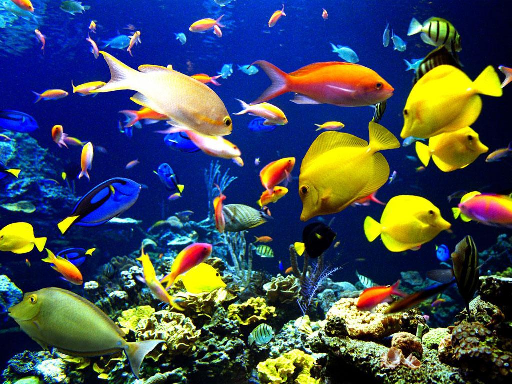 صورة موضوع تعبير عن عالم البحار , معلومات عن المحيطات والانهار