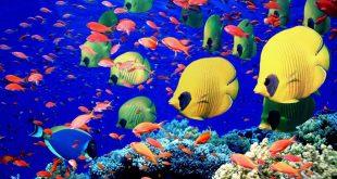 صور موضوع تعبير عن عالم البحار , معلومات عن المحيطات والانهار