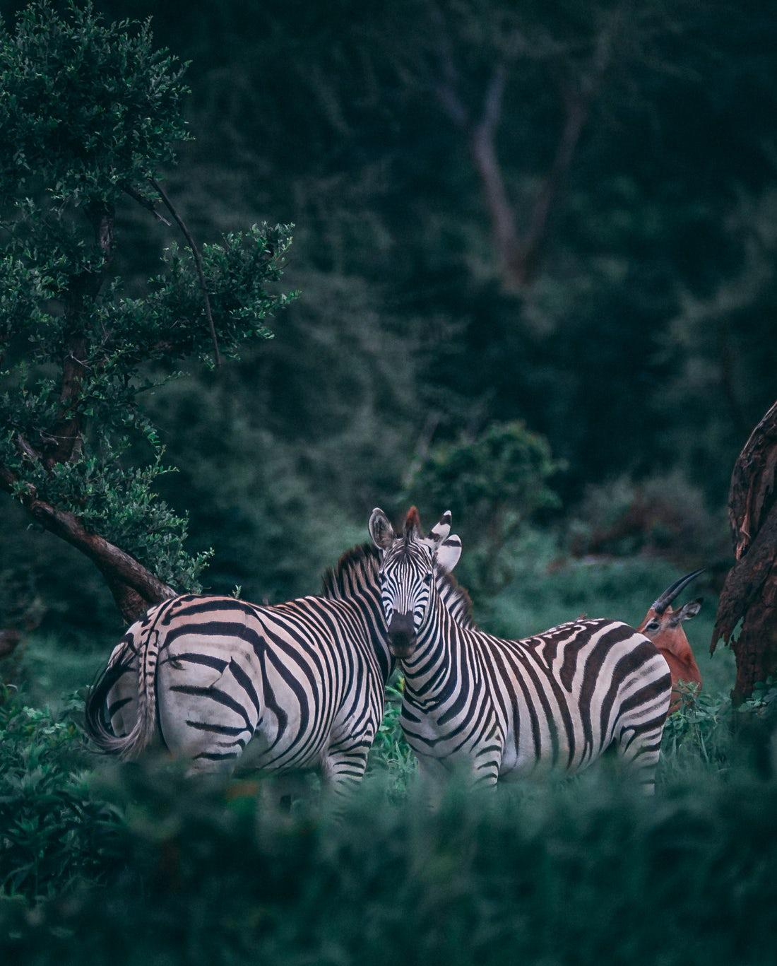 صور هل الحيوانات تحيض , الحيوانات تحيض كانثي الانسان