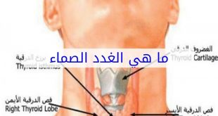 صور ما هي الغدد الصماء , تعرف على الغدد الصماء ووضائفها بالجسم