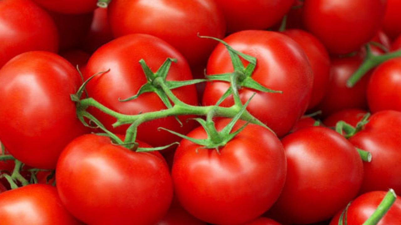صور طريقة تخزين الطماطم , نصائح لحفظ الطماطم لمدة طويلة بالفريزر