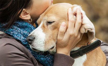 صورة افضل اسماء الكلاب , الحيوانات الاليفة