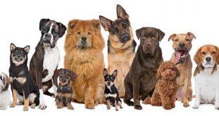 صور افضل اسماء الكلاب , الحيوانات الاليفة