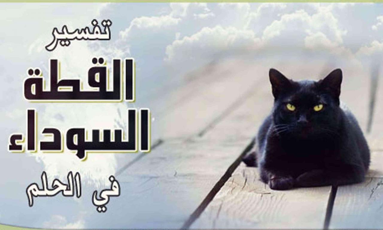 صورة تفسير الاحلام القط الاسود , القط الاسود ورسالته لك فى المنام