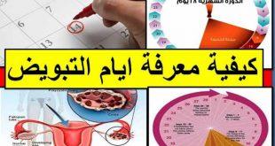 صورة متى تكون البويضه نشطه بعد الدوره , مواعيد البويضه النشطه عند المراه