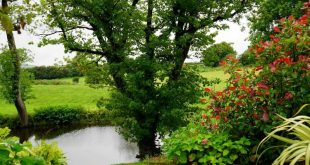 صور الارض الخضراء في المنام , الرقعه الخضراء فى المنام