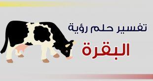 صور تفسير رؤية البقرة في المنام للحامل , تفسير ظهور البقره للحامل فى المنام