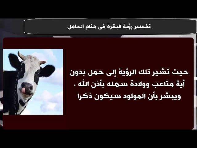 صورة تفسير رؤية البقرة في المنام للحامل , تفسير ظهور البقره للحامل فى المنام