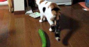 صورة طرق تطفيش القطط , ابعاد القطط بطرق امنه
