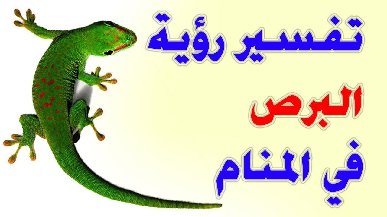 صور رؤية حيوان البرص فى المنام لابن سيرين , ماذا يعنى وجود البرص فى المنام