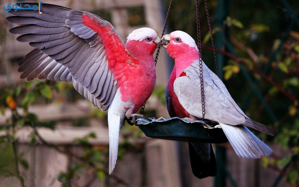 صور اجمل صور عصافير , عصافير تحفه وجميله فى الصور