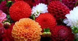 صورة صور خلفيات زهور , خلفيه ورد وزهور رائعه
