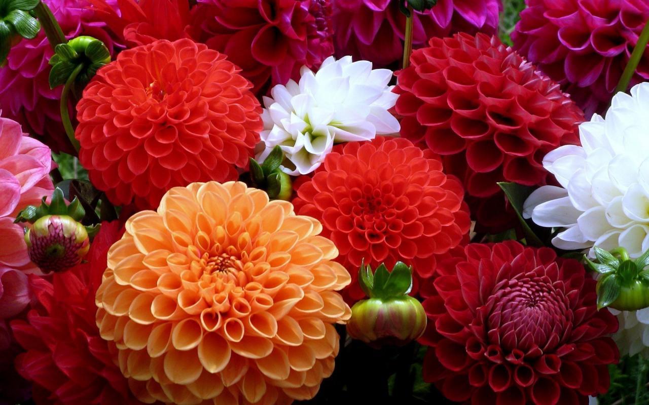 صور صور خلفيات زهور , خلفيه ورد وزهور رائعه