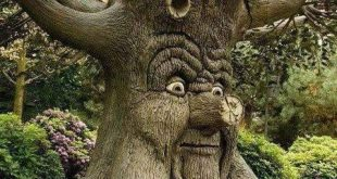 صور اغرب الاشجار في العالم بالصور , شجر غريب جدا ستندهش