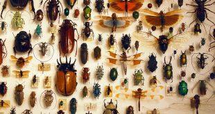 صورة بحث عن الحشرات , التعرف على انواع الحشرات