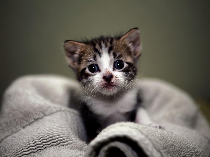 صورة صورة قطة صغيرة , قطط كيوت قوي وجميله