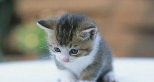 صورة قطة صغيرة , قطط كيوت قوي وجميله