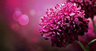 صورة صور جميلة ورائعة , صور مفيش اجمل من كدا تجنن