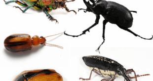 صور انواع الحشرات بالصور , حشرات لم اراها من قبل ابدا شاهد بنفسك
