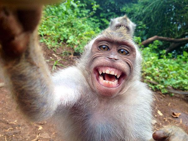 صور الصور المضحكة للحيوانات , اتحداك مش هتبطل ضحك