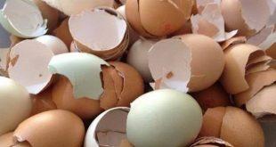 صورة فائدة قشر البيض , لقشر البيض فوائد كثيرة تعرف عليها