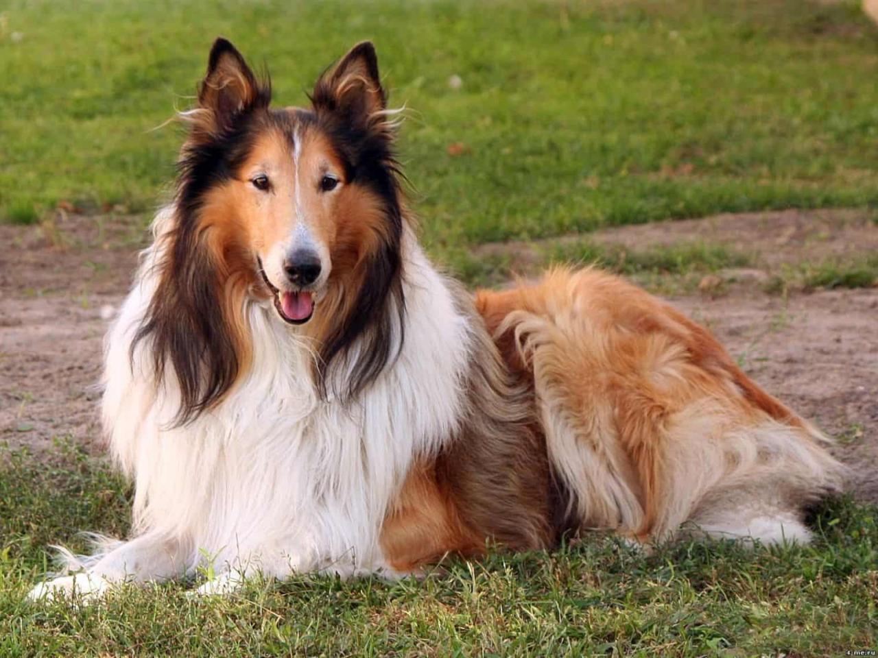 صورة الكلاب في الحلم , تفسير رؤية الكلاب في المنام